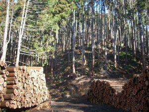 搬出された原木_つくばね森林組合