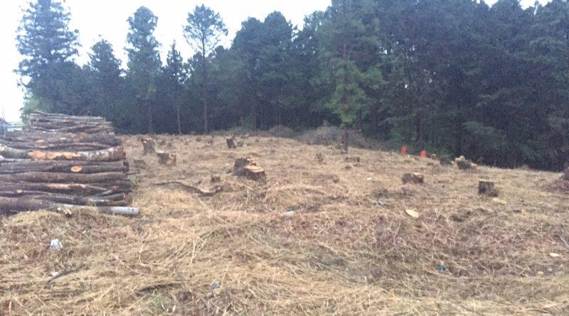 しいたけ原木林の更新伐後_つくばね森林組合