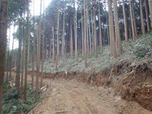 作業道開設_つくばね森林組合