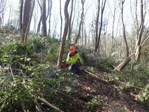 伐採作業_つくばね森林組合