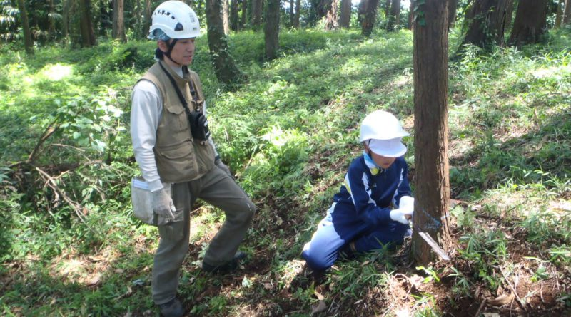 間伐体験指導_つくばね森林組合