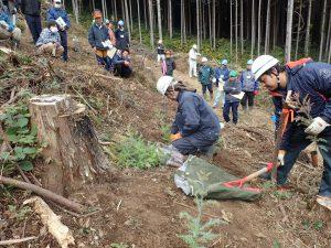 植栽(コンテナ苗)_つくばね森林組合