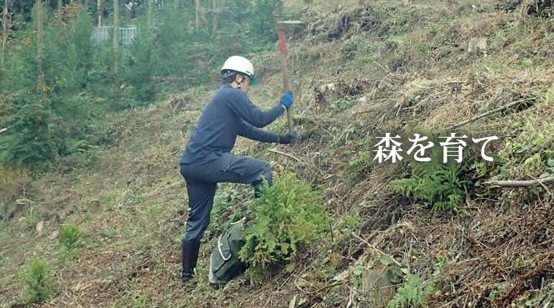 つくばね森林組合-森を育て