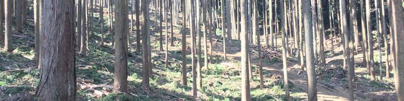 つくばね森林組合理念