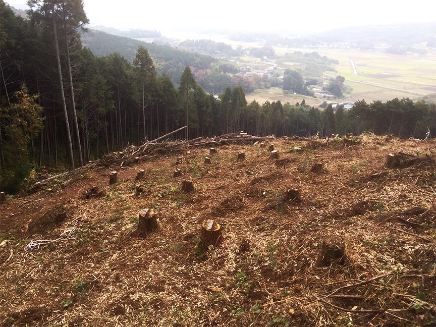 主伐後の山林